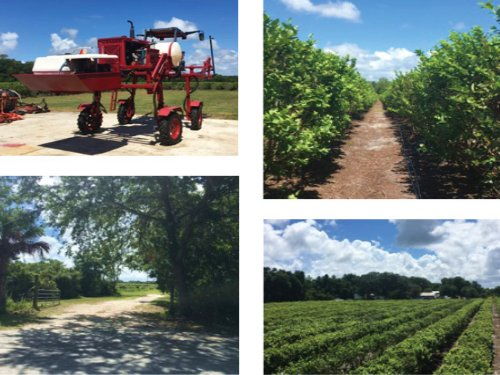 17 Acre Blueberry Farm : Mims : Brevard County : Florida