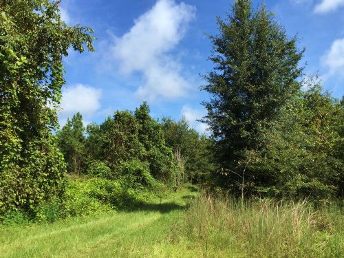 Vacant, Recreational Land, For Sale : Lake City : Columbia County : Florida