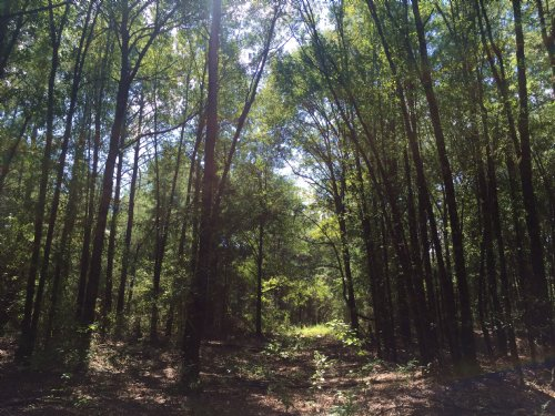 Free Tract, Hunting And Timber Land : Kinston : Coffee County : Alabama