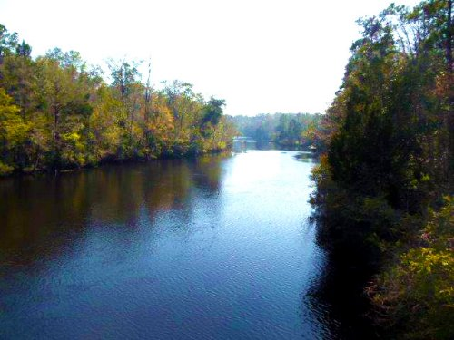 St Marks River Ranch, Lot 4 : St. Marks : Wakulla County : Florida