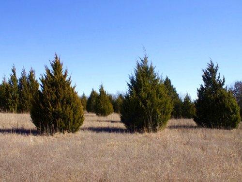 10.47 Acres Montgomery Ranch, Pond. : Marietta : Love County : Oklahoma