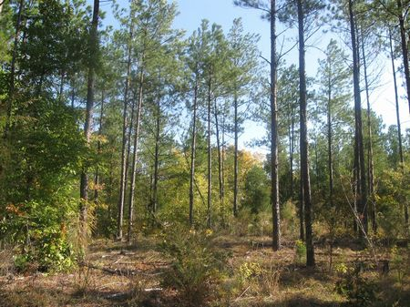 Timber Investment Tract : Union : Union County : South Carolina