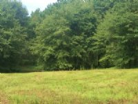 20 Acres With A Pond : Banks : Pike County : Alabama