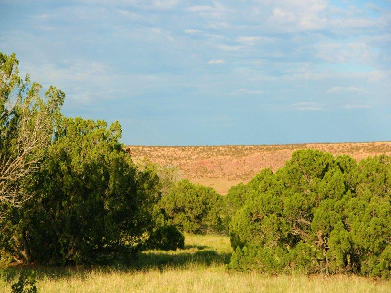 38 Acre Mountain Ranches $260 Mo : Saint Johns : Apache County : Arizona