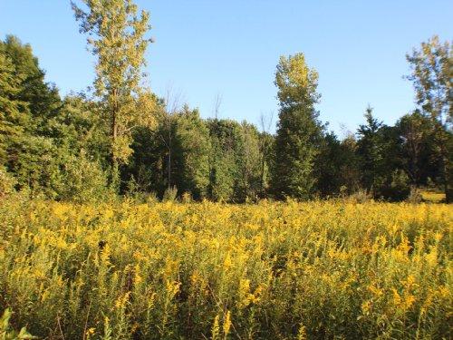 Tr 232 - 26 Acres : Marengo : Morrow County : Ohio