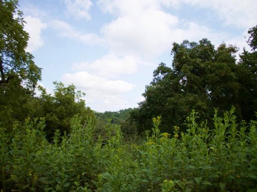 Heritage Hollow Hunting Land : Spencer : Roane County : West Virginia