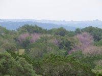 Pinon Canyon Ranch 37 Acres : Rocksprings : Edwards County : Texas