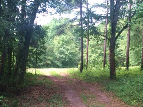 11 Acres With Large Planted Pines : Banks : Pike County : Alabama