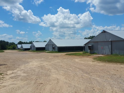 5 House Broiler Farm On 50+/- Acres : Fyffe : DeKalb County : Alabama