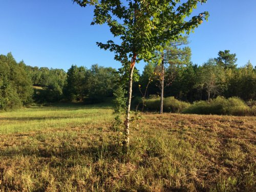 Near Birmingham - 106+/- Acres : Pell City : St. Clair County : Alabama