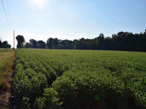 Sr 521 - 70 Acres : Sunbury : Delaware County : Ohio