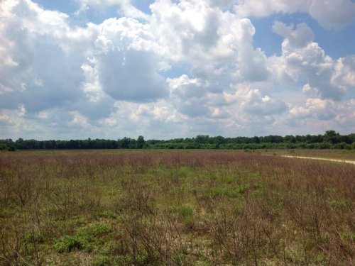 305 Acres : Dalzell : Sumter County : South Carolina
