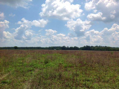 220 Acres : Dalzell : Sumter County : South Carolina