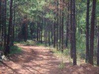 Upscale, Large Acreage Community : Macon : Bibb County : Georgia