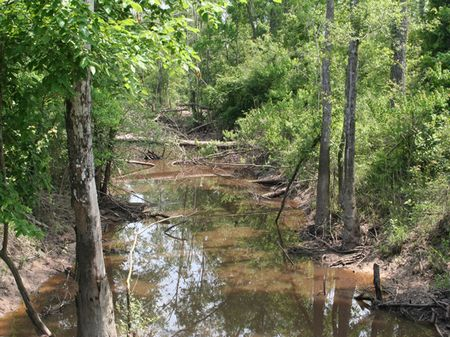 Black Creek Ranch : Kountze : Hardin County : Texas