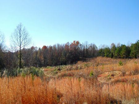 Riverfront Property : Roebuck : Spartanburg County : South Carolina