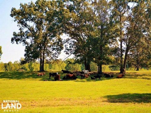 Hamilton Cattle Farm : Hamilton : Marion County : Alabama