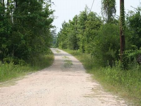 Cherry Hill Ranch : Kountze : Hardin County : Texas