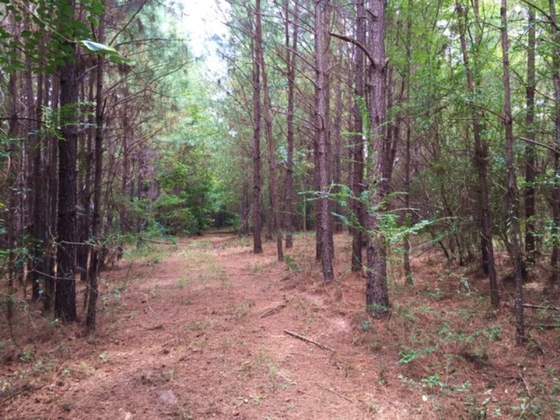 Hudson Settlement Rd Tract : Brantley : Crenshaw County : Alabama