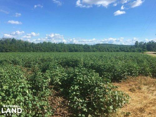Cane Creek Tract : Evergreen : Conecuh County : Alabama