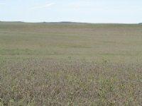 1,353.84+/- Farm Land Acres