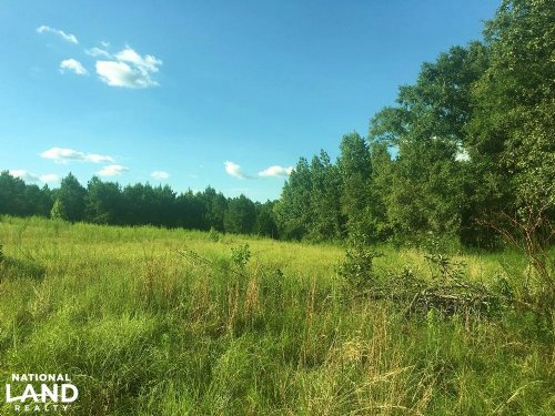 The Evergreen Lizard Lope Road Trac : Evergreen : Conecuh County : Alabama