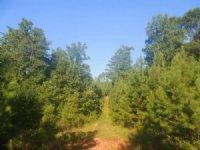 55.6 Ac Ridgeway Road : Franklin : Heard County : Georgia