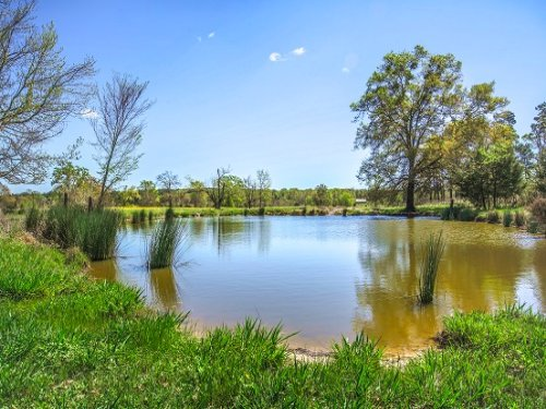 128 Acres / 10073861 : Leesburg : Camp County : Texas