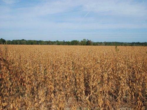 Farm - Transitional : Cairo : Grady County : Georgia