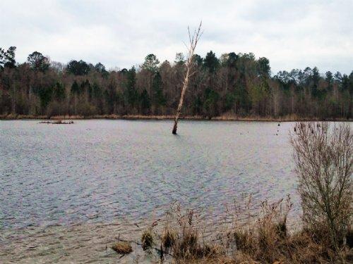 279 Acres With 24 Acre Lake : Banks : Pike County : Alabama
