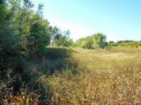 11/7/16 Auction: 160 Acres Of Grass