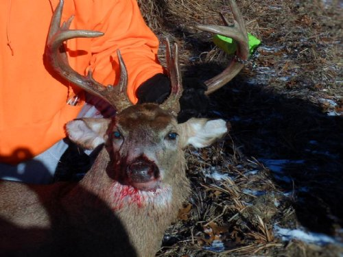39+ Acres Of Hunting Land : Mauston : Juneau County : Wisconsin