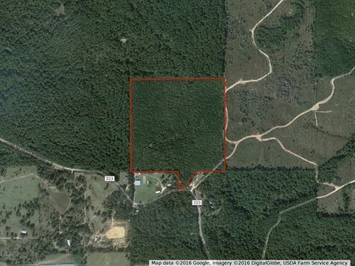 Hunting Timberland For Sale Clarke : Quitman : Clarke County : Mississippi