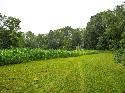 Sealover Hollow Rd - 218 Acres : Philo : Muskingum County : Ohio