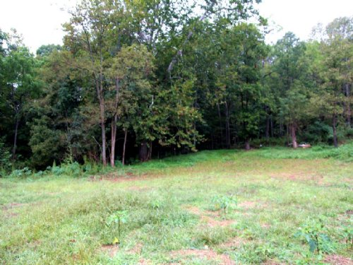 For Sale: 168± Acres Of Timberland : Roanoke : Virginia