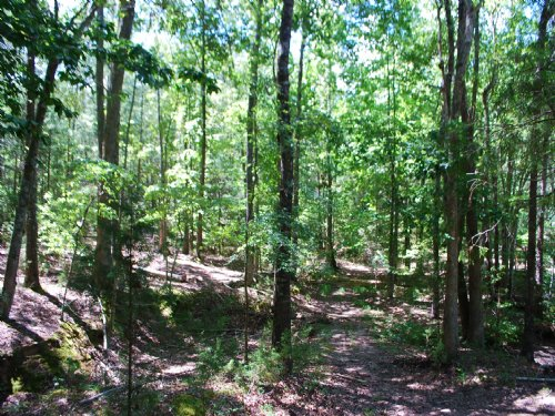 15Ac. Timberland/Recreational Tract : Union : South Carolina