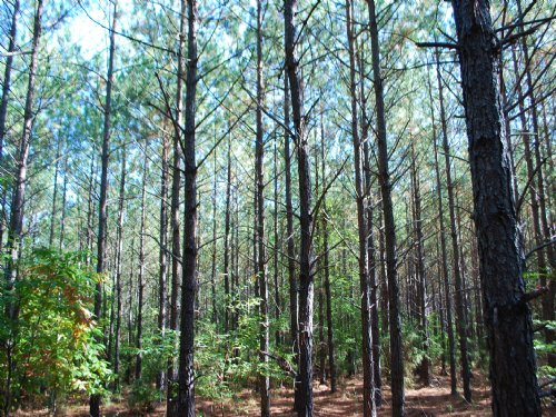 31Ac. Timberland/Recreational Tract : Union : South Carolina