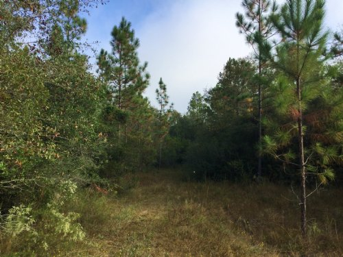 Long Creek Tract : Laurel Hill : Walton County : Florida