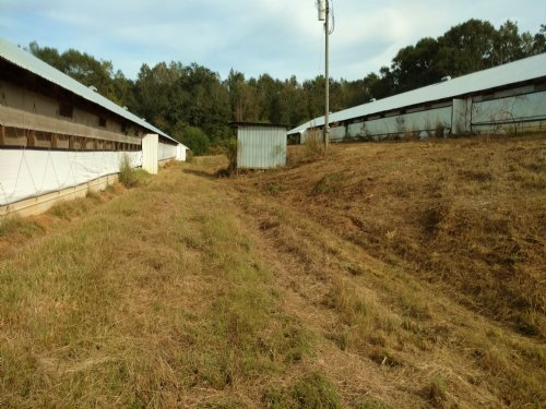 Wilkinstown Poultry Farm : Wilkinstown : Coffee County : Alabama