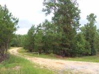 Zibelin Tract : Currie : Pender County : North Carolina