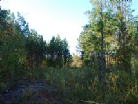 Rec. Tract Adjoin National Forest : Union : Union County : South Carolina