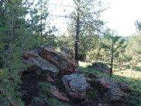 Boyle Road Ranch
