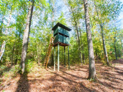 442+/- Ac  Pine Plantation : Waverly : Chambers County : Alabama