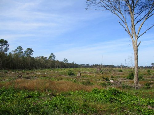 212 Acres On Gibbs Street : Waycross : Ware County : Georgia