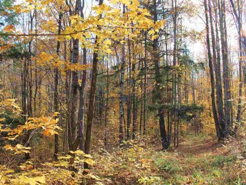 Lot 158 Light Blue Rd. Mls 1098364 : Laird Twp : Houghton County : Michigan