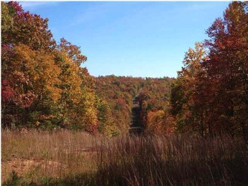 47.52+/- Acres Hunting Tract : Whitwell : Marion County : Tennessee