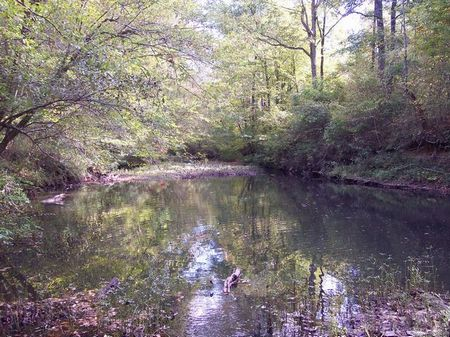 856 Acres <$1300 Ac Hunting Galore : Brilliant : Marion County : Alabama