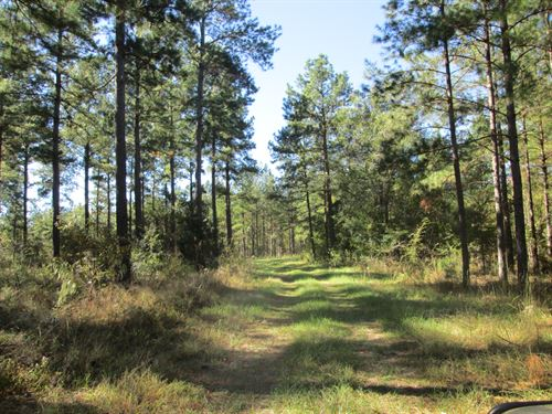 Planted Pine Plantation : Hawkinsville : Pulaski County : Georgia