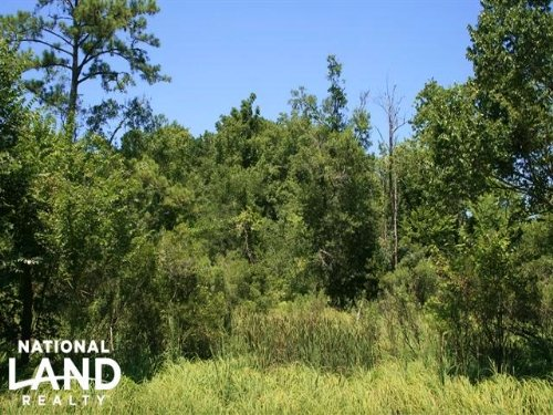 Pungo River Hunting And Timber Trac : Belhaven : Beaufort County : North Carolina