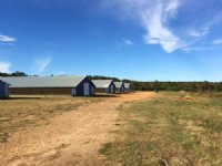 70± Ac Poultry Farm : Mount Olive : Covington County : Mississippi